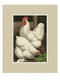 Roosters with Mat I Giclee Print by Cassel 
