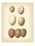 Bird Egg Study II Reproduction procédé giclée par Vision Studio