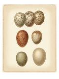 Bird Egg Study I Giclée-Premiumdruck