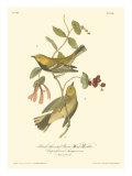 Black-throated Green Wood Warbler Posters par John James Audubon