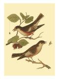 Antique Bird Pair I Reproduction giclée Premium par James Bolton