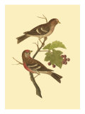 Antique Bird Pair II Affiches par James Bolton