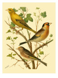 Domestic Bird Family VI Prints by W. Rutledge