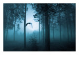 Forest Flight Print by Andreas Stridsberg