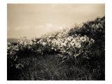 Fleurs des champs Reproduction procédé giclée par Andrew Geiger