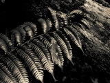 Resting Fern Photographic Print by Andrew Geiger