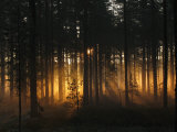 Forest - Early Light Photographic Print by Andreas Stridsberg