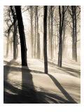 Silent Forest Poster von Andrew Geiger