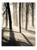 Silent Forest Giclee Print by Andrew Geiger