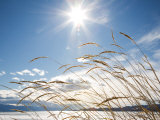 Winter Grass Photographic Print by Andrew Geiger