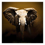 On Safari Giclee Print by Bobbie Goodrich