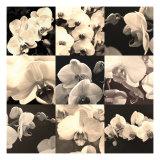 Orchid Rhapsody Giclee Print by Katja Marzahn