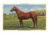 Man O'War, Kentucky Thoroughbred Prints