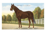 War Admiral, Racehorse Posters