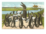 Alligator Chorus in New Orleans, Louisiana Poster