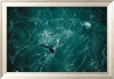 Baleine Poster by Yann Arthus-Bertrand