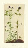 Three Medicinal Herbs: Pansy, Brunella, Anagallis Reproduction pour collectionneur par Albrecht Dürer