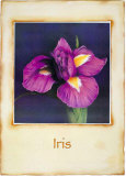 Iris Print by Richard Penn