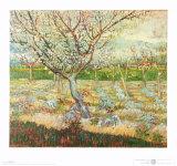 Olivenbäume Kunstdrucke von Vincent van Gogh