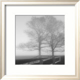 Seaside Tree Prints by Mary Ruppert