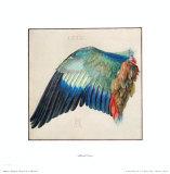 Fluegel der Blaurake Sammlerdrucke von Albrecht Dürer