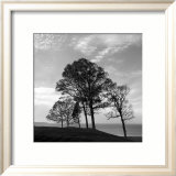 Trees from Storm Print by Mary Ruppert