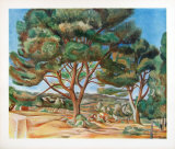 The Stone Pine Collectable Print by Andre Derain