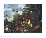 Bird Concert Collectable Print by Melchior De Hondecoeter
