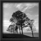 Trees from Storm Prints by Mary Ruppert