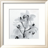 Orchid Spray I Prints by Tom Artin