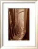Cypress Trail Posters by Paul Kozal