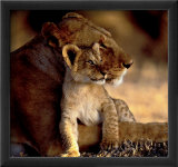 Lioness with Cub Posters by Michel &amp; Christine Denis-Huot