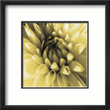 Butter Dahlia Prints by Shawn Kapitan