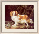 King Charles Spaniel Psters por George Stubbs