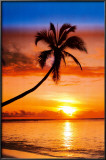 Sunset Palm Print