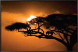 African Sky Posters