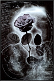 Mercury Rose Poster