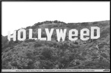 Hollyweed Print