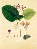 East Indian Plants I Premium Giclee Print by Nathaniel Wallich