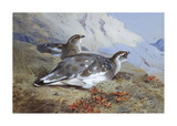 Ptarmigan in Summer Foliage Premium Giclee Print by Archibald Thorburn