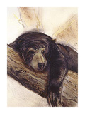 The Black Bear Lámina giclée de primera calidad por Philip Blacker