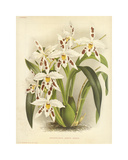 Hothouse Orchids III Premium Giclee Print by A. Poiteau