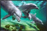 Dolphins Prints