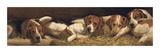 Foxhounds At Rest Collectable Print by Charles Church