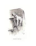 Cracker on the Wall Premium Giclee Print by Cecil Aldin
