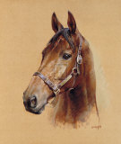 Legend (Best Mate) Limited Edition by Susan Crawford
