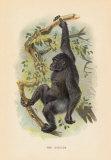 The Gorilla Premium Giclee Print