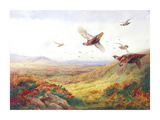 Partridges in Flight Premium Giclee Print by Archibald Thorburn