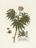 The Duke Of Cumberland Botanical Premium Giclee Print by Georg Ehret