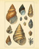 Shells I Premium Giclee Print by Maria Mendez